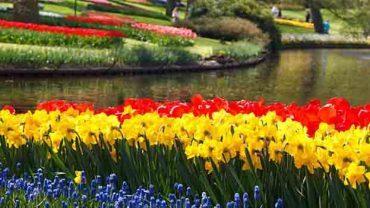 Kampoeng Tulip