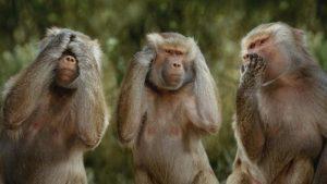 animal-monkey_00214527-e1375189304990