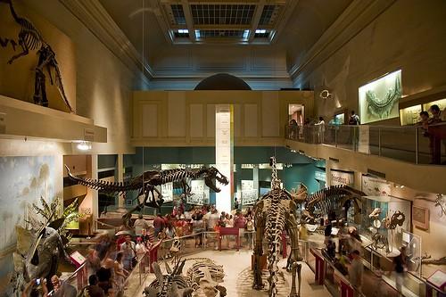 aula dinosaurus