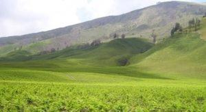 Wisata Di Gunung Bromo Indonesia