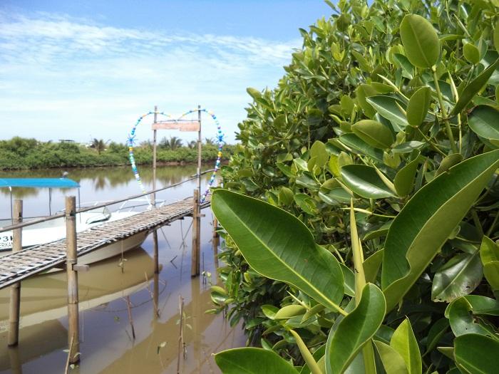 mangrove wana tirta