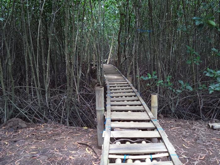 goa mangrove kulon progo