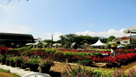 Keindahan Kebun Begonia