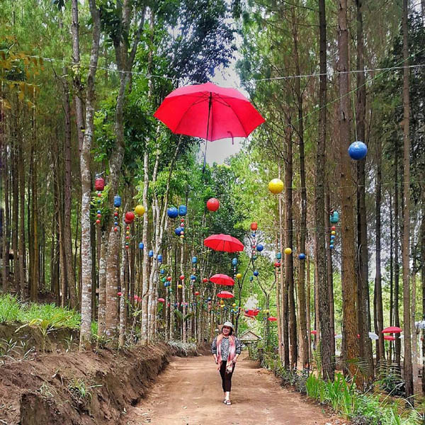 Obyek wisata Hutan Pinus