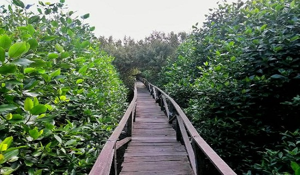 Wisata Alam Hutan Bakau Margomulyo