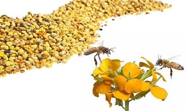 bee pollen complex lebah