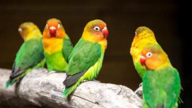 peluang bisnis burung kicau
