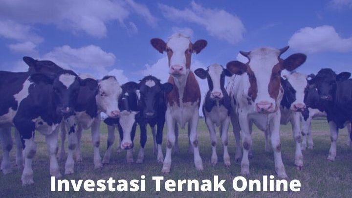 Investasi Ternak Online