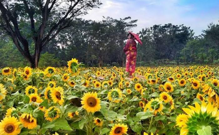 Taman Nawari Yogjakarta