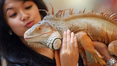 Hobi Memelihara Reptil